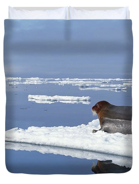 Bearded Seal Resting On Ice Floe Norway Duvet Cover by Flip Nicklin