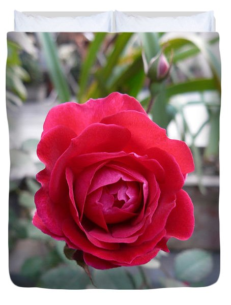 Beautiful Red Rose In A Small Garden Duvet Cover by Ashish Agarwal