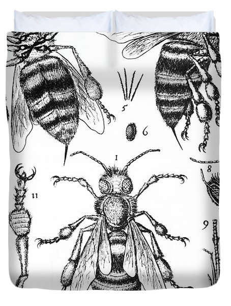 Bee Anatomy Historical Illustration Duvet Cover by SPL and Photo Researchers