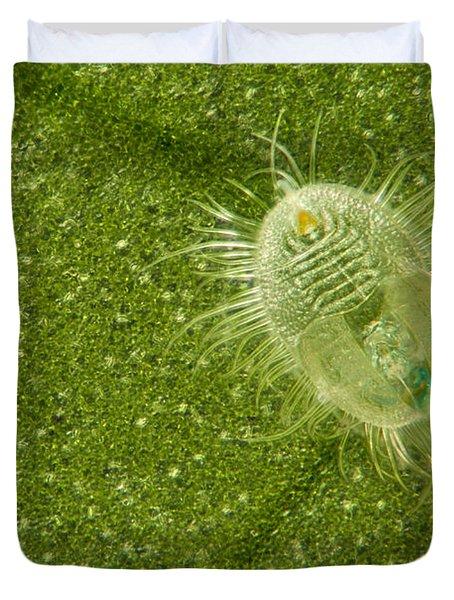 Beetle Larvae On Leaf Duvet Cover by Raul Gonzalez Perez