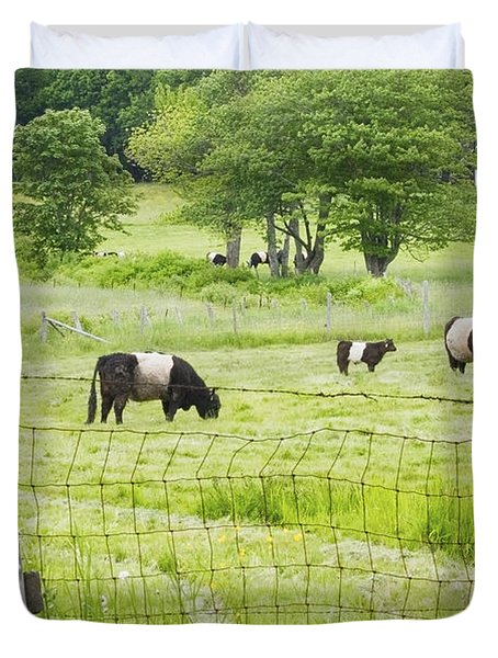 Belted Galloway Cows On  Farm Rockport Maine Photo Duvet Cover by Keith Webber Jr