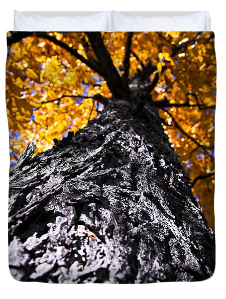 Big Autumn Tree In Fall Park Duvet Cover by Elena Elisseeva