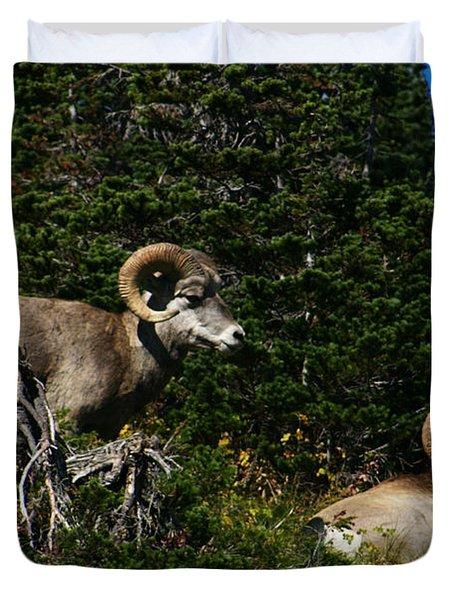Big Horn Sheep Glacier National Park Duvet Cover