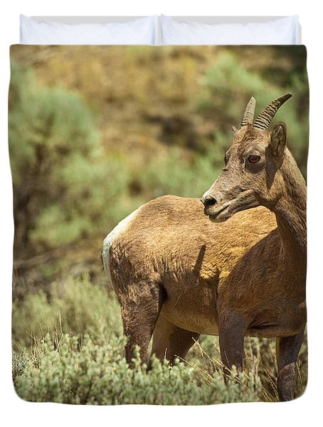 Bighorn Sheep Duvet Cover by Sebastian Musial