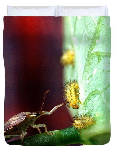 Biocontrol Of Bean Beetle Duvet Cover