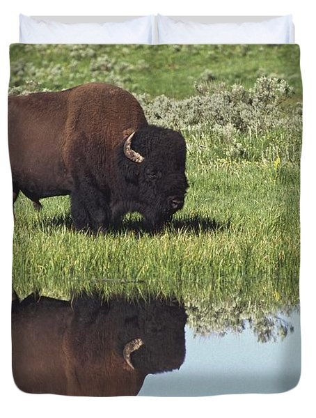 Bison Bison Bison On Grassy Meadow With Duvet Cover by David Ponton