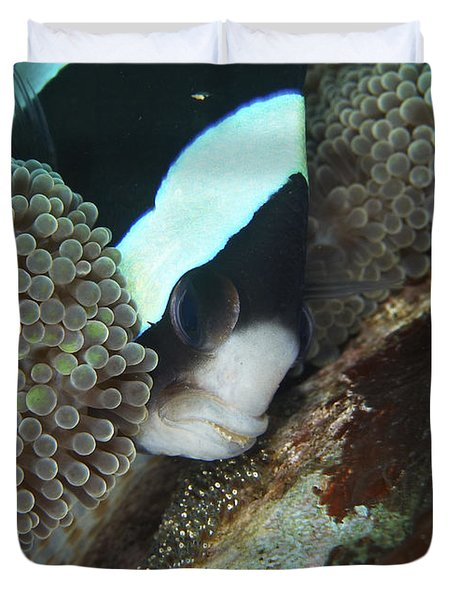 Black And White Anemone Fish Looking Duvet Cover by Mathieu Meur