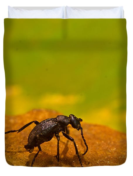 Black Beetle 1 Duvet Cover
