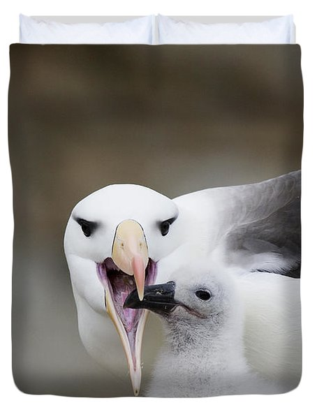Black Browed Albatross Preparing Duvet Cover by Suzi Eszterhas