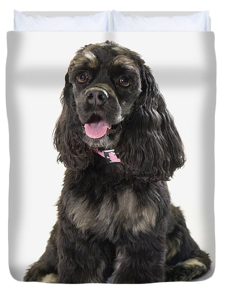 Black Cocker Spaniel With Golden Boots Duvet Cover by Corey Hochachka