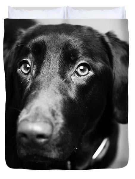 Black Labrador  Duvet Cover by Sumit Mehndiratta