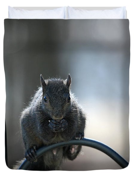 Black Squirrel  Duvet Cover by Karol Livote