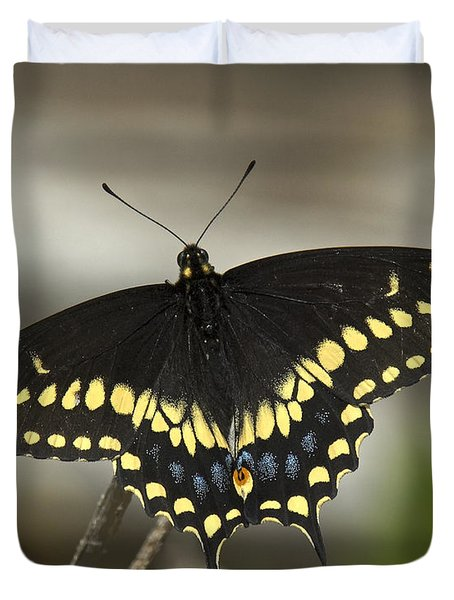 Black Swallowtail Din103 Duvet Cover by Gerry Gantt