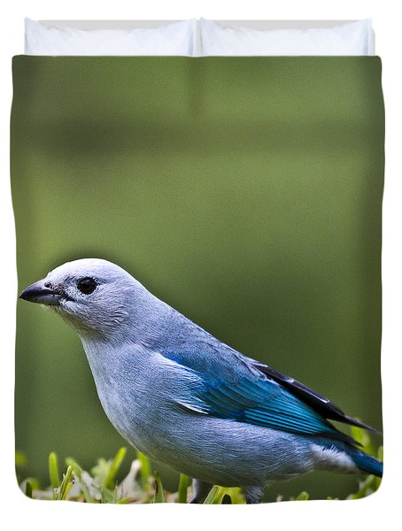 Blue-grey-tanager Duvet Cover by Heiko Koehrer-Wagner