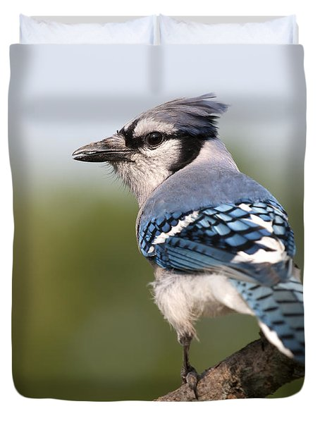 Blue Jay Duvet Cover by Art Whitton
