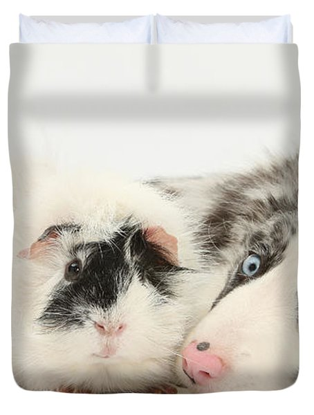 Blue Merle Border Collie With Guinea Pig Duvet Cover by Mark Taylor