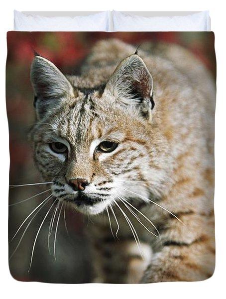 Bobcat Felis Rufus Duvet Cover by David Ponton