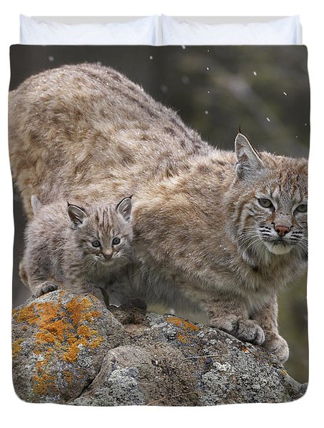 Bobcat Mother And Kitten In Snowfall Duvet Cover by Tim Fitzharris