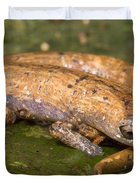 Bolitoglossine Salamander Duvet Cover by Dante Fenolio