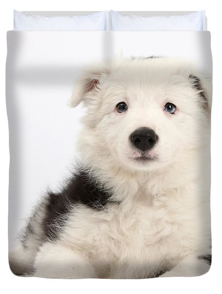 Border Collie Female Puppy Duvet Cover by Mark Taylor