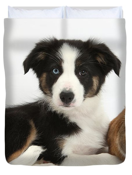 Border Collie Pup And Netherland-cross Duvet Cover by Mark Taylor