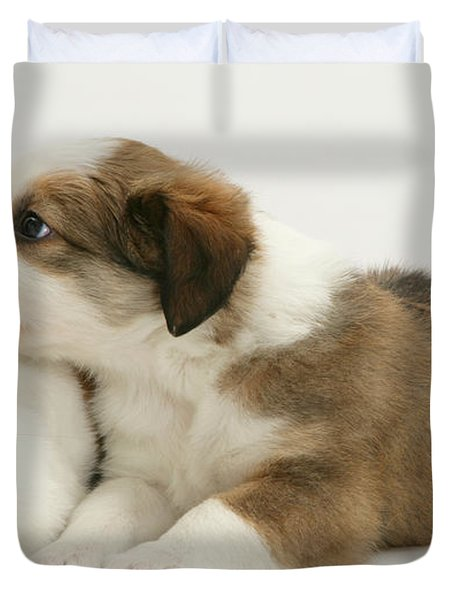 Border Collie Pup With Dutch Rabbit Duvet Cover by Jane Burton