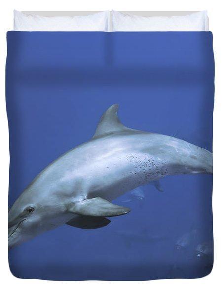 Bottlenose Dolphin Duvet Cover by Tom Peled