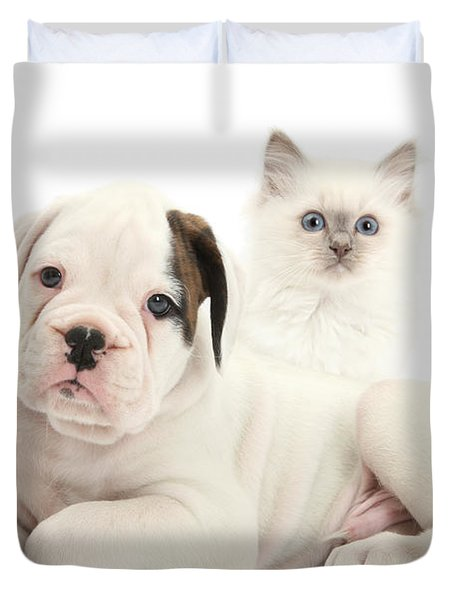 Boxer Puppy And Blue-point Kitten Duvet Cover by Mark Taylor