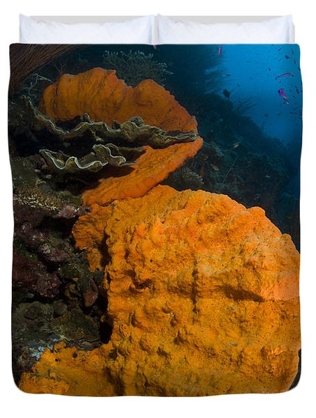 Bright Orange Sponge With Sunburst Duvet Cover by Steve Jones