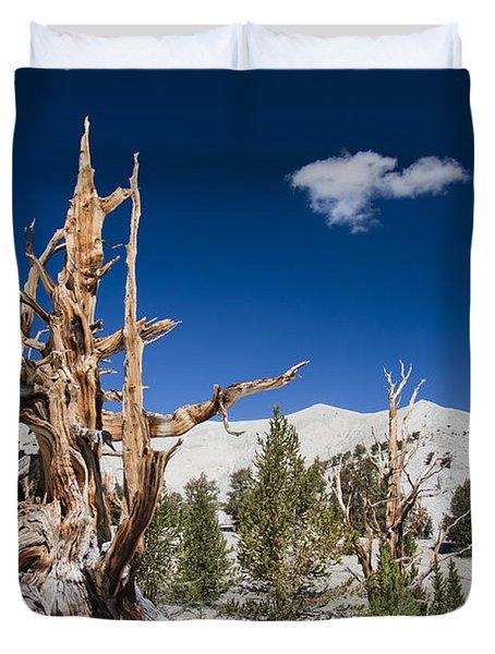 Bristlecone Pine - Pinus Longaeva Duvet Cover