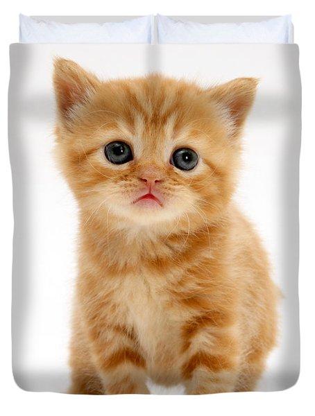 British Shorthair Red Tabby Kitten Duvet Cover by Jane Burton