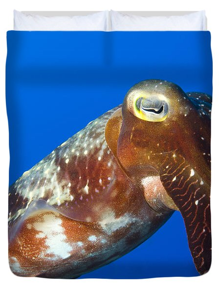 Broadclub Cuttlefish, Papua New Guinea Duvet Cover by Steve Jones