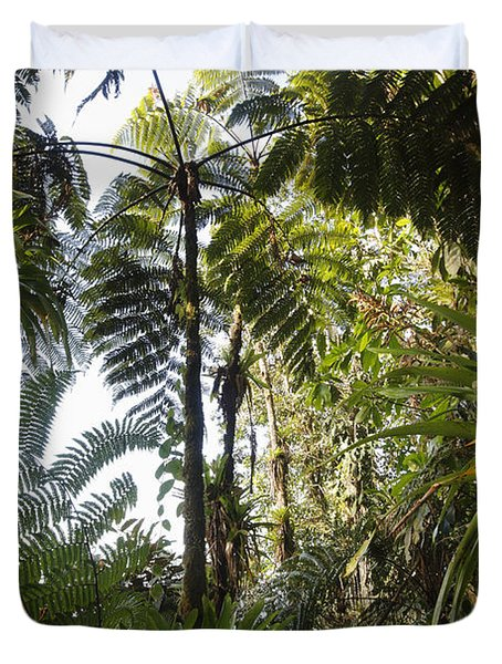 Bromeliad And Tree Ferns  Duvet Cover by Cyril Ruoso