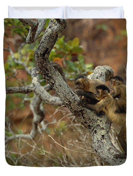 Brown Capuchin Cebus Apella Three Duvet Cover by Pete Oxford