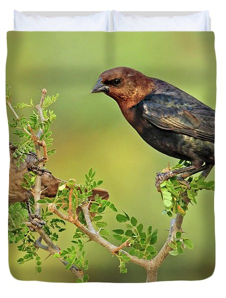 Brown Headed Cowbird Pair Duvet Cover