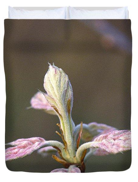 Budding Oak Leaves Duvet Cover