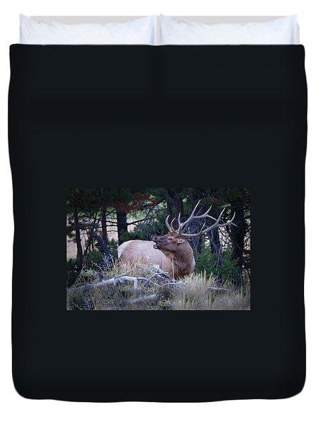 Bugling Bull Elk Duvet Cover