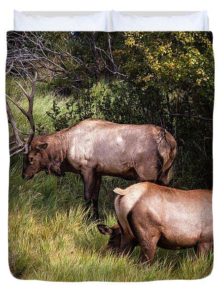 Bull Elk 7x7 Duvet Cover
