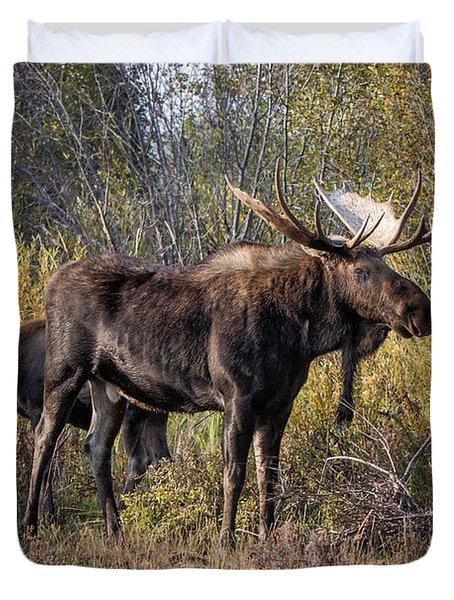 Bull Tolerates Calf Duvet Cover
