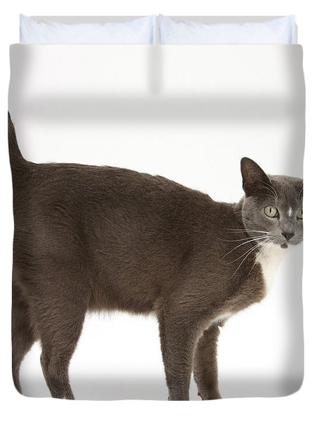 Burmese-cross Cat Duvet Cover by Mark Taylor
