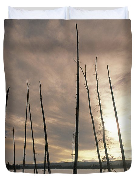 Burnt Pieces Of Black Spruce, Boggy Duvet Cover by Darwin Wiggett