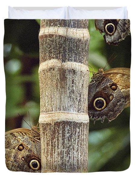 Butterflies Duvet Cover by Bilderbuch