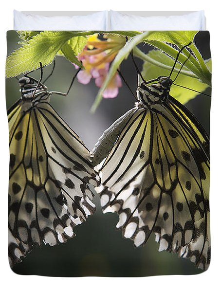 Butterfly Duo Duvet Cover by Eunice Gibb