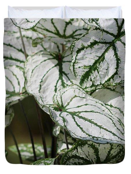 Caladium Named White Christmas Duvet Cover by J McCombie