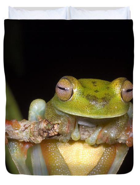 Canal Zone Tree Frog Duvet Cover by Dante Fenolio