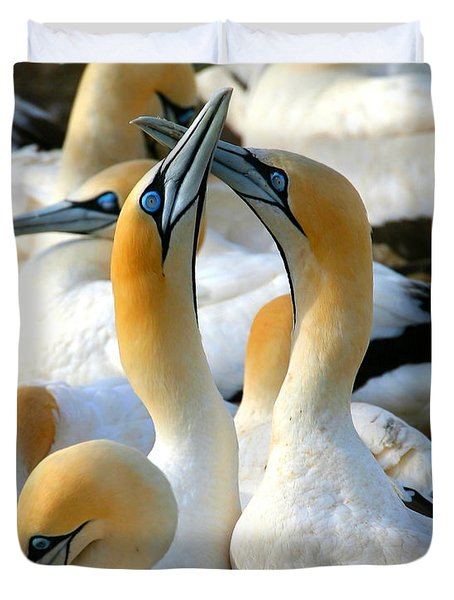 Cape Gannet Courtship Duvet Cover