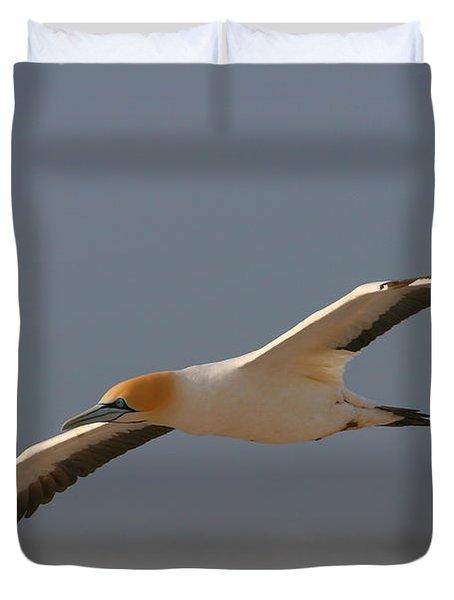 Cape Gannet In Flight Duvet Cover by Bruce J Robinson