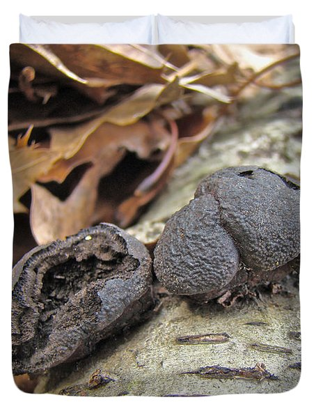 Carbon Balls Fungi - Daldinia Concentrica Duvet Cover by Mother Nature
