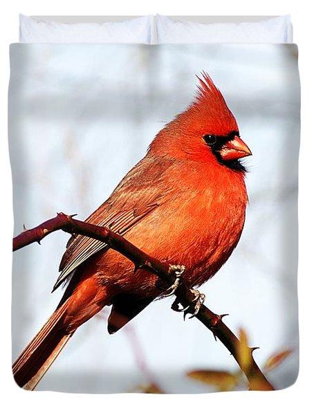 Cardinal 1 Duvet Cover by Joe Faherty