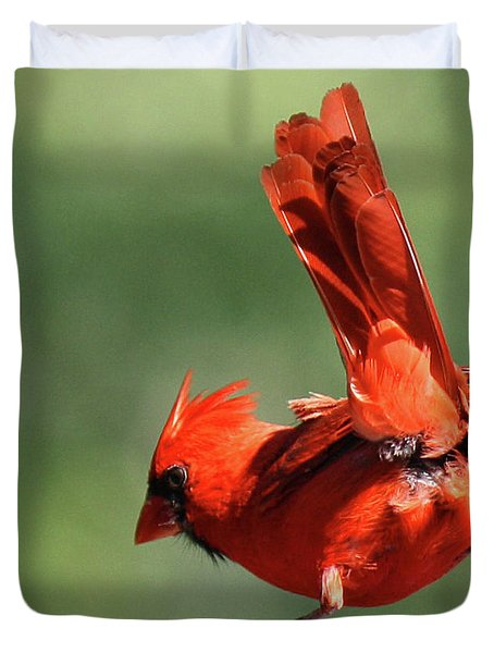 Cardinal-a Picture Is Worth A Thousand Words Duvet Cover